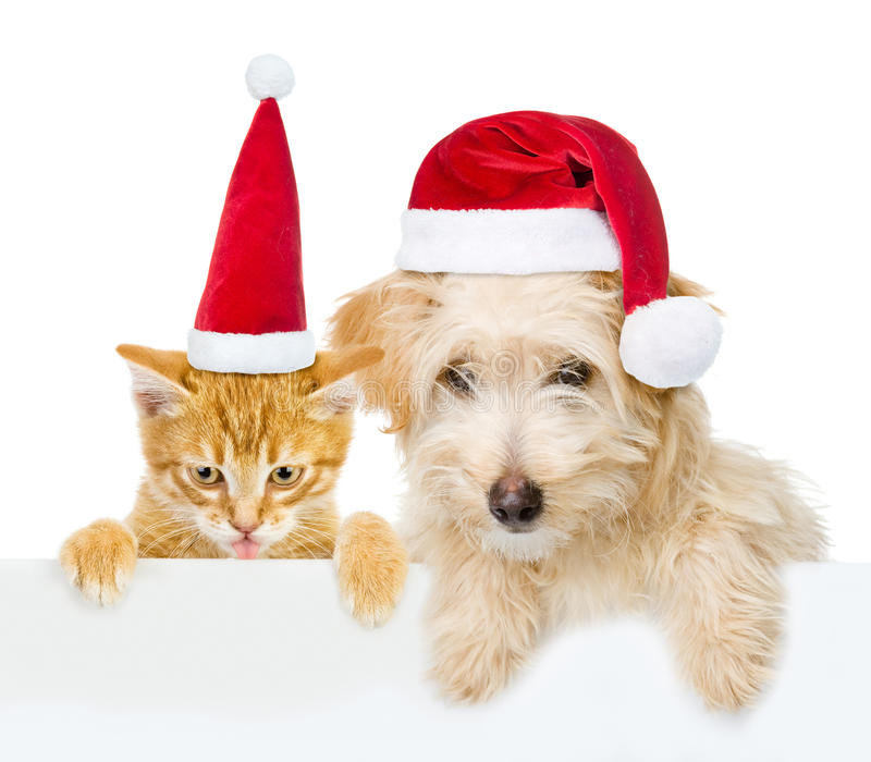 Cat and dog with red christmas hats peeking from behind empty board and looking at camera. isolated on white background.  royalty free stock photo