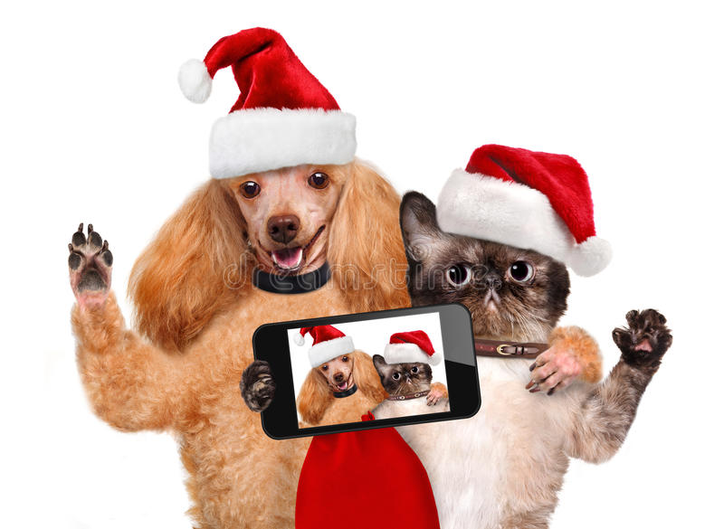 Cat and dog in red Christmas hats. Taking a selfie together with a smartphone stock photography