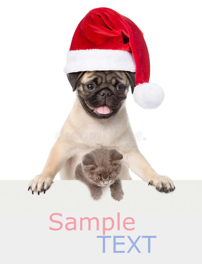 Cat and Dog with red Santa Claus hat above white banner. isolated on white royalty free stock images