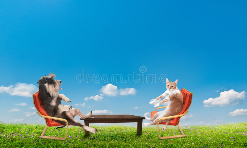 Cat and dog relaxing. Funny cat and dog relaxing royalty free stock photos