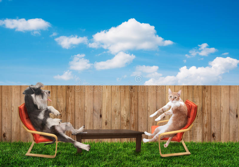 Cat and dog relaxing. Funny cat and dog relaxing at backyard royalty free stock photo