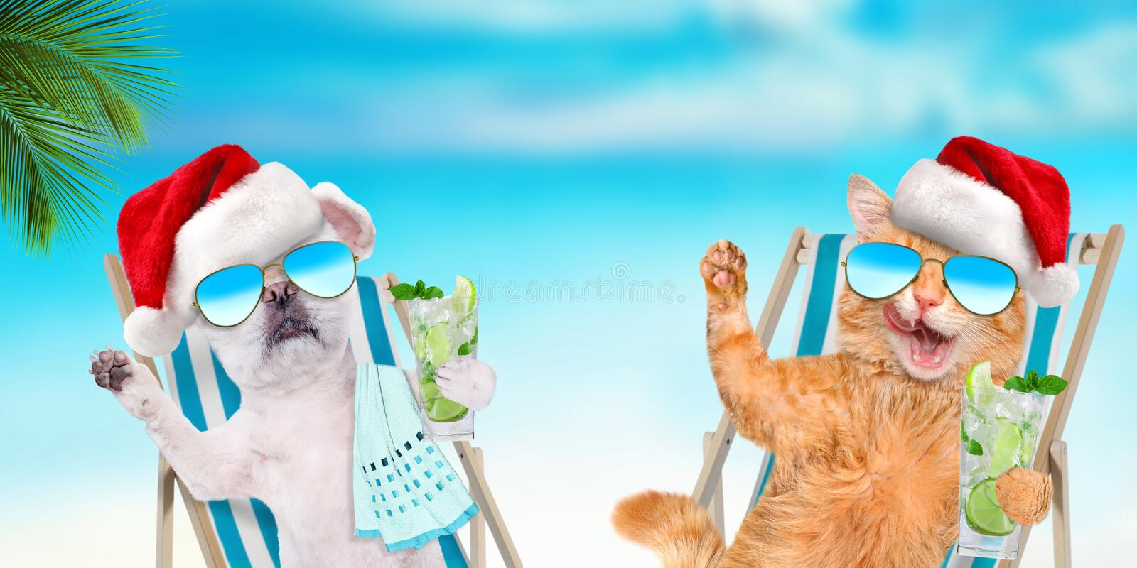 Cat and dog relaxing sitting on deckchair with cocktail on the sea background. Christmas royalty free stock photo