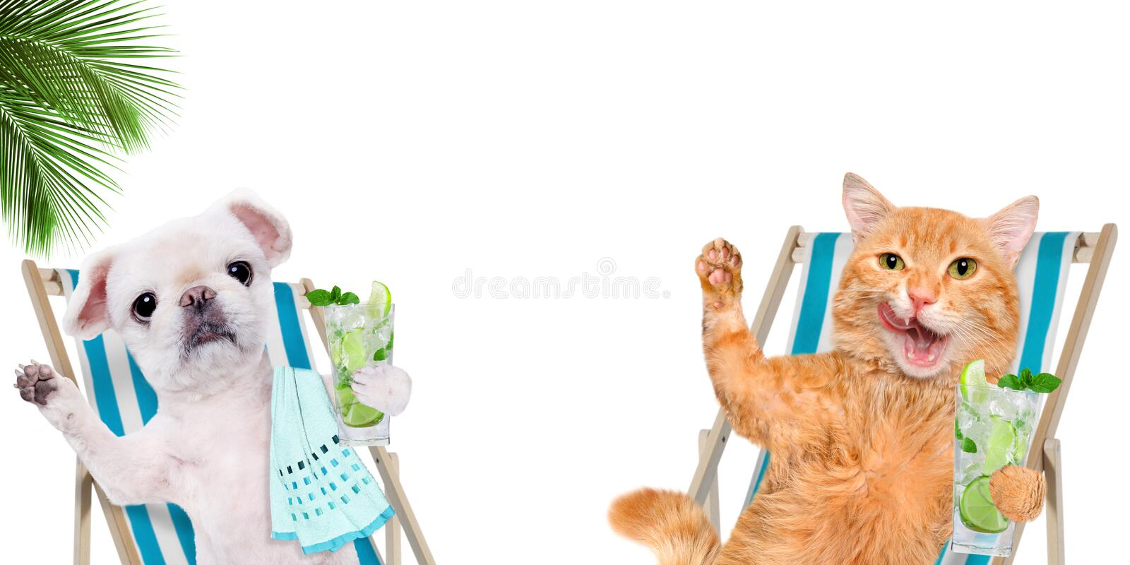 Cat and dog relaxing sitting on deckchair with cocktail . Cat and dog relaxing sitting on deckchair with cocktail on the white background royalty free stock photography