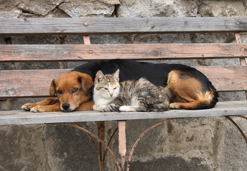 Cat and dog are resting stock photos
