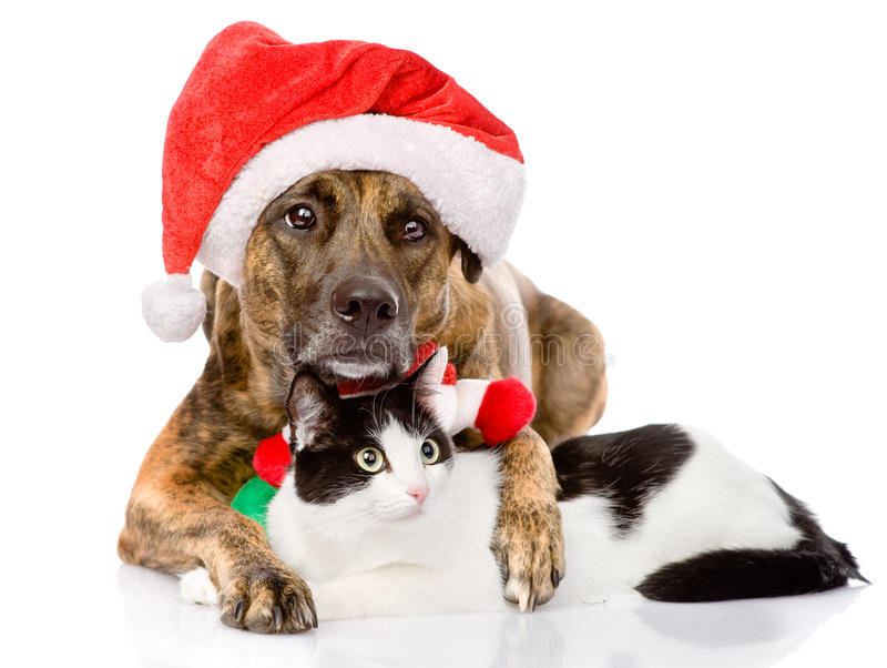 Cat and Dog with Santa Claus hat. isolated on white background.  stock photography
