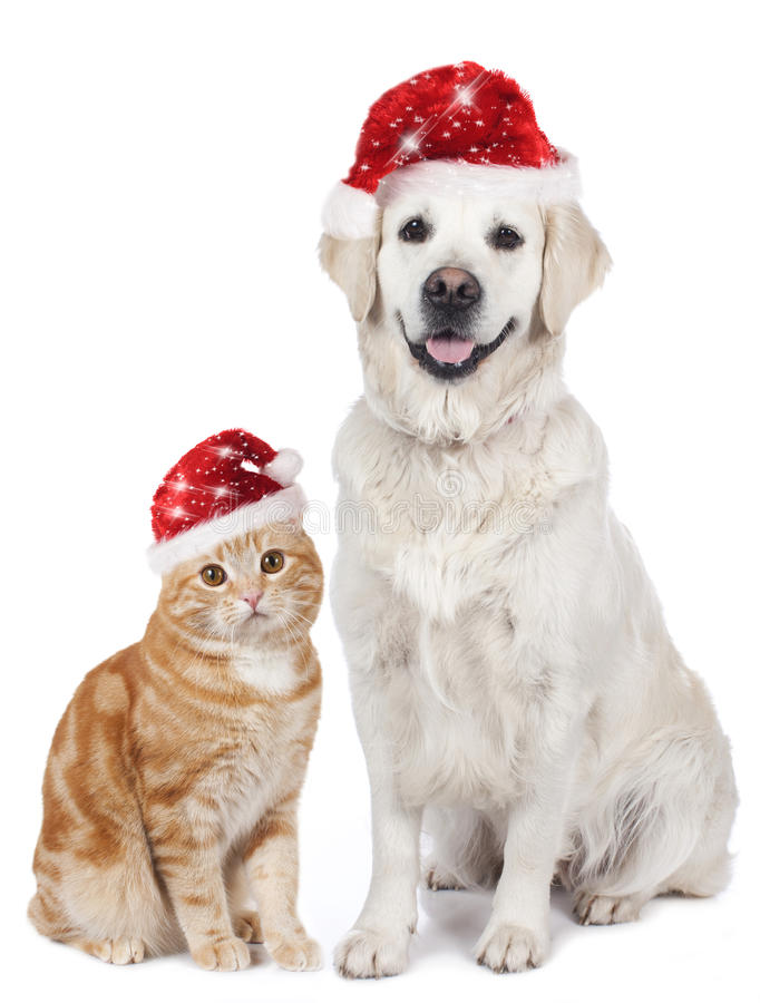 Cat and dog with santa hat royalty free stock photo