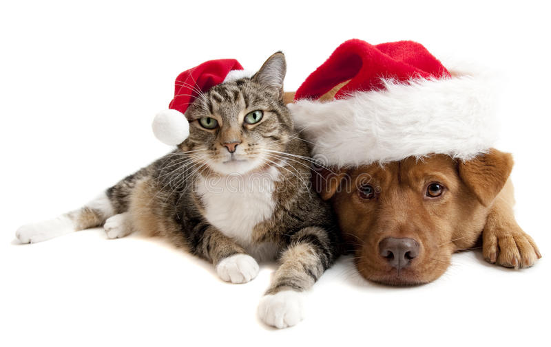 Cat and Dog with Santas Claus hats. On white background stock images