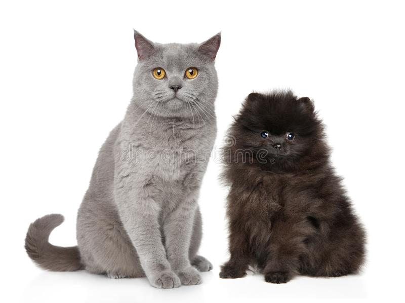 Cat and dog sits on white background. Cat and Dog together sits on white background. Studio shooting royalty free stock image