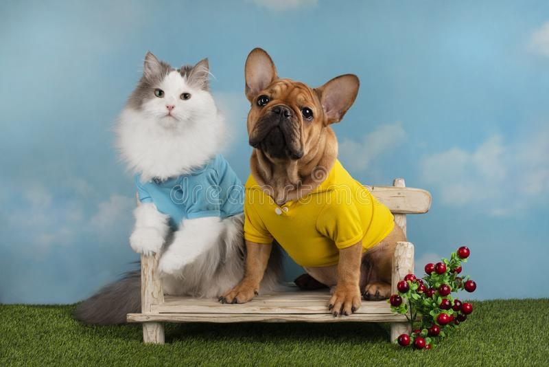 Cat and dog are sitting on a bench in the summer afternoon.  stock photos