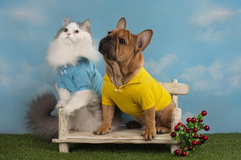 Cat and dog are sitting on a bench in the summer afternoon.  stock photo