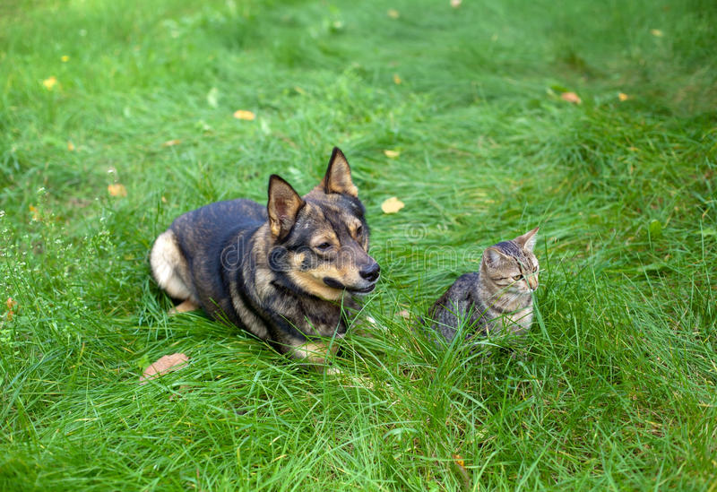 Cat and dog. Sitting together on the grass stock image