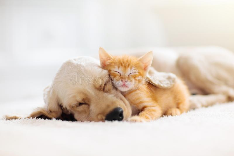 Cat and dog sleeping. Puppy and kitten sleep royalty free stock photography