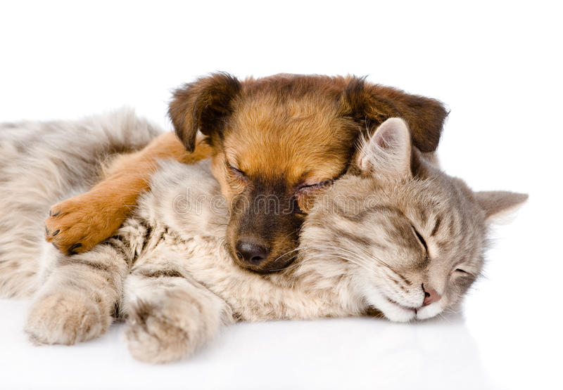 Download Cat And Dog Sleeping Together. Isolated On White Background Stock Image - Image of adorable, friendship: 53683499