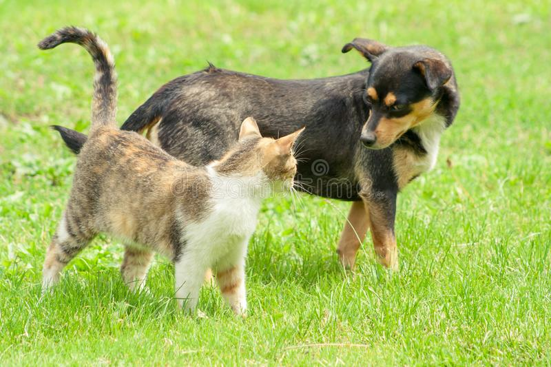 Cat and dog are standing on the grass and look into each other`s eyes. Beautiful animal friendship. Cat and dog love royalty free stock photo