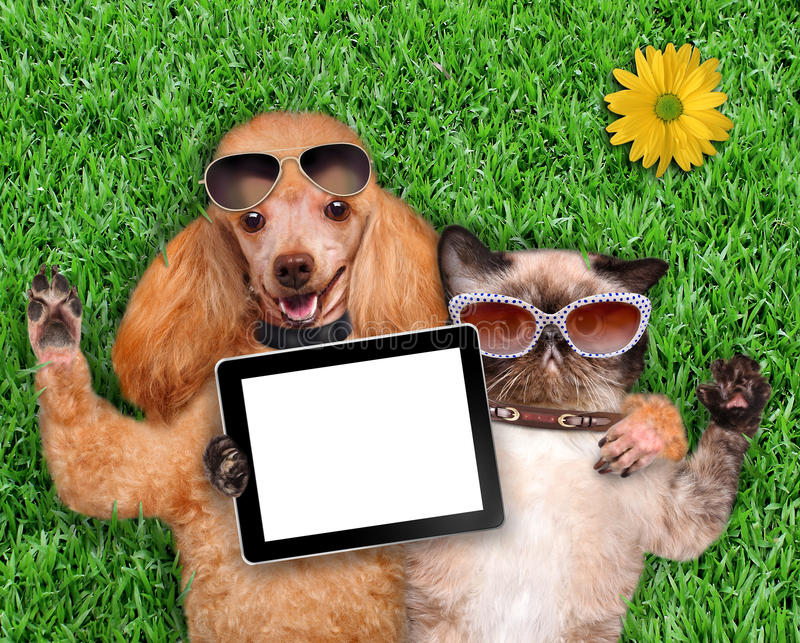 Cat and dog taking a selfie. Dog with a cat lying on the grass stock photos