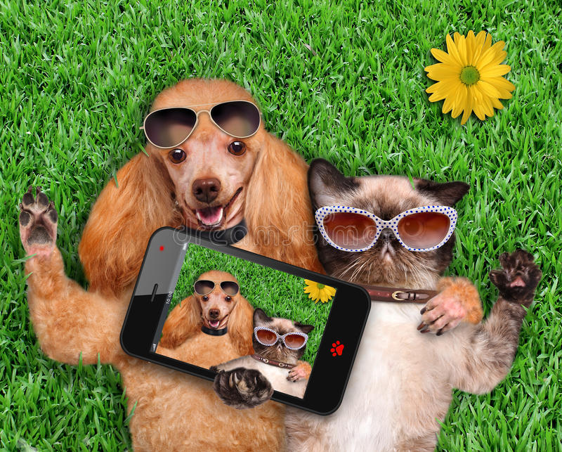 Cat and dog taking a selfie. Dog with a cat lying on the grass royalty free stock image