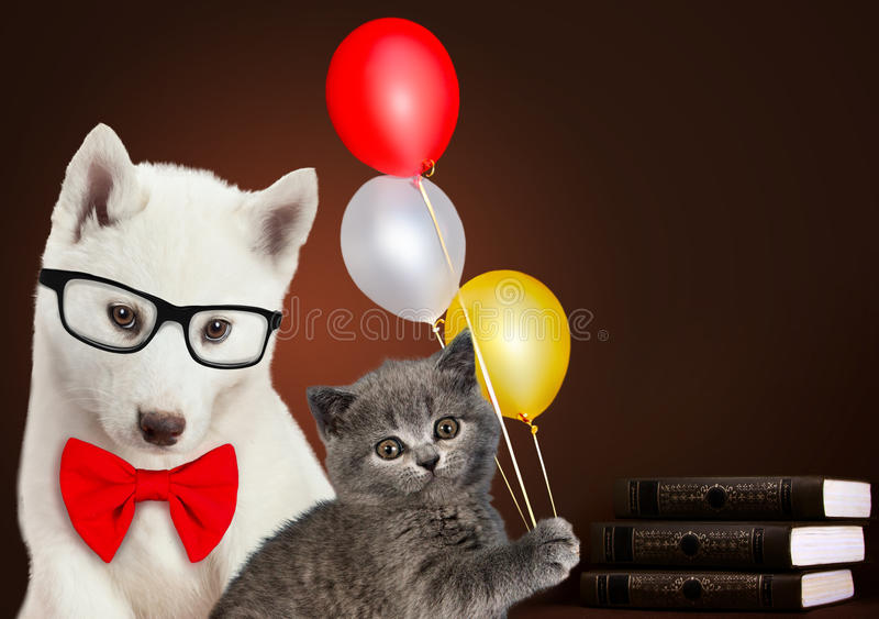 Cat and dog together with books and balloons, Scottish kitten, Husky puppy. Celebration mood. stock photography