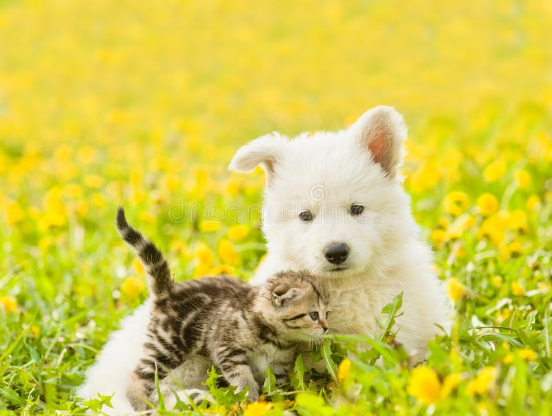 Cat and dog together on a dandelion field.  stock photo
