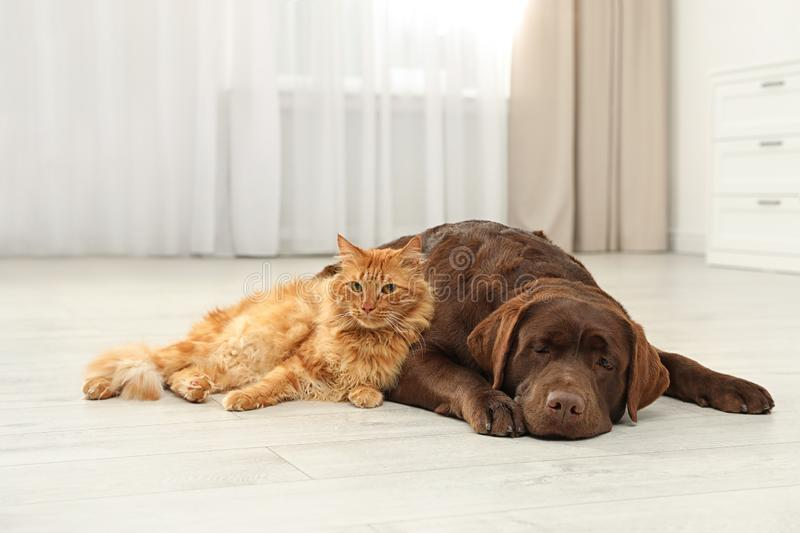 Cat and dog together looking at camera on floor. Fluffy friends stock photography