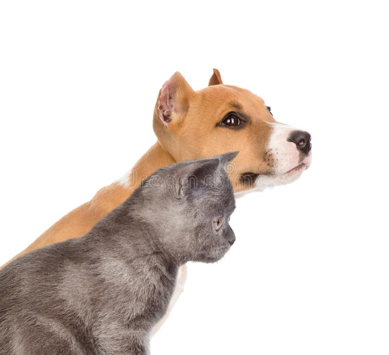 Cat and dog together in profile. isolated on white background.  stock image
