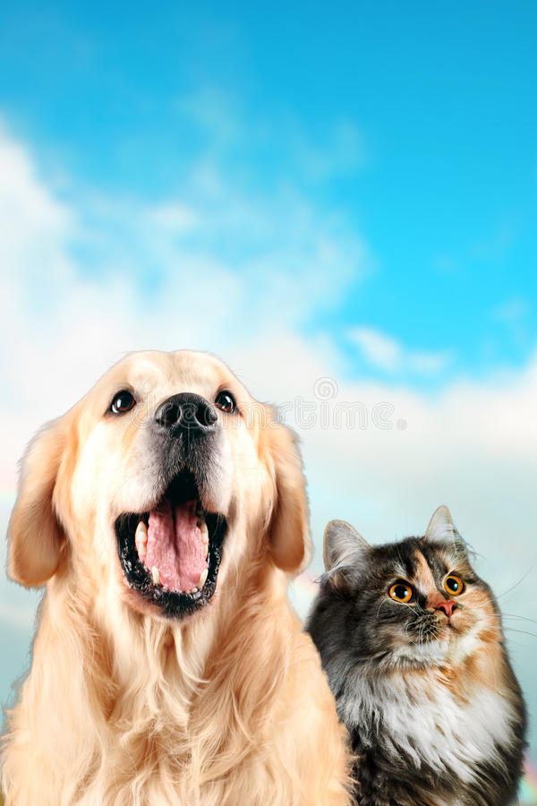 Cat and dog together, siberian, golden retriever looks top, on Blue Cloudy Background.  royalty free stock image