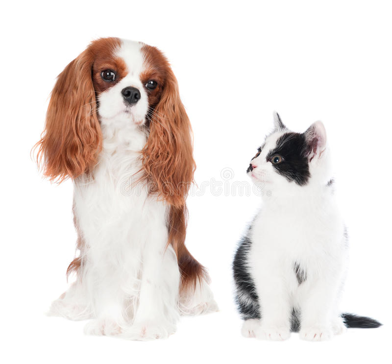 Cat and dog. Together on white