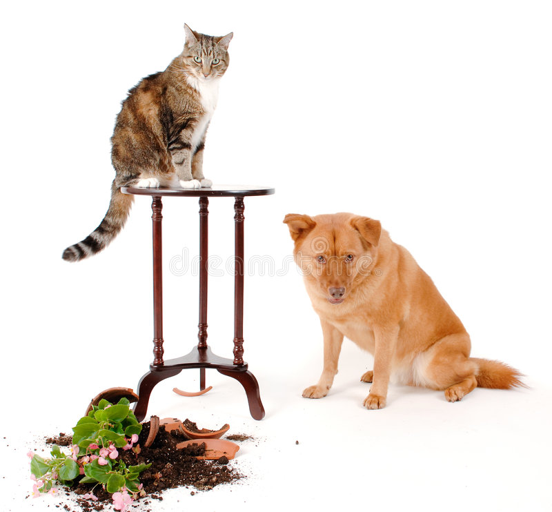 Cat and Dog troublemakers stock image