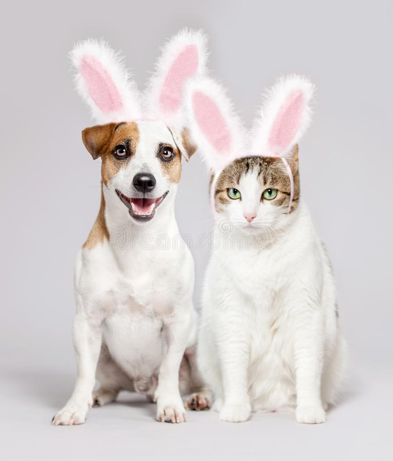 Cat and dog wearing Easter bunny ears peeking out royalty free stock images