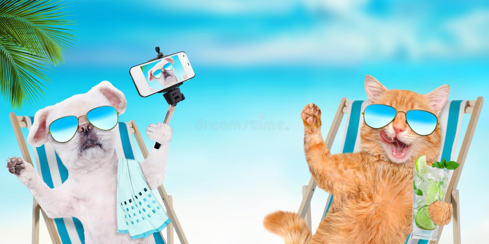 Cat and dog wearing sunglasses relaxing sitting on deckchair . Cat and dog wearing sunglasses relaxing sitting on deckchair on the sea background royalty free stock photo