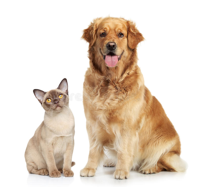 Download Cat And Dog On A White Background Stock Photos - Image: 24981493