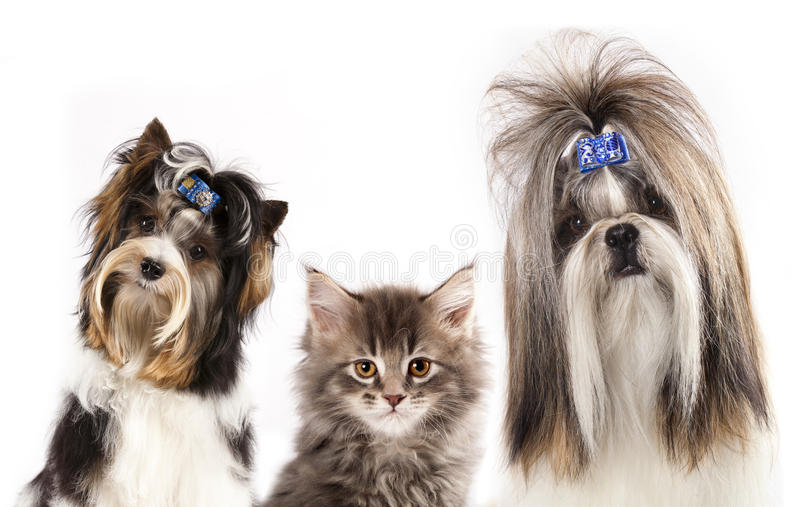 Cat And Dogs Stock Image