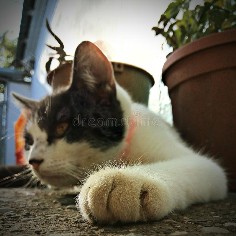 Cat. Domestic cat, focus on foreground, mammal, animal royalty free stock image