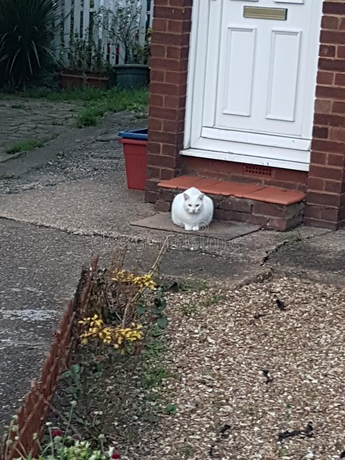 Cat doorstep stock images