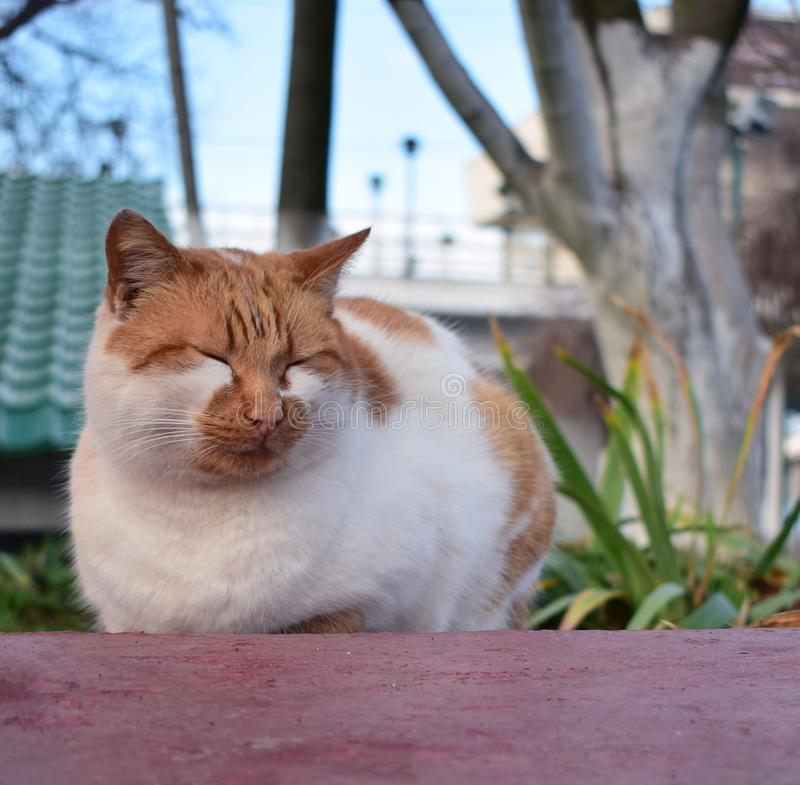 the cat is dozing on the street royalty free stock images