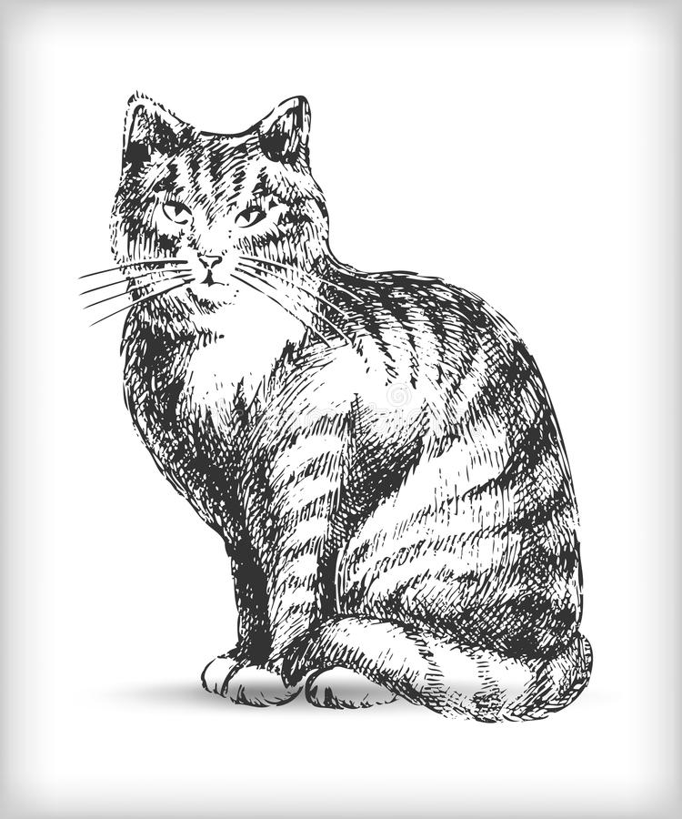 Download Cat drawing stock vector. Image of front, artwork, cutout - 16005658