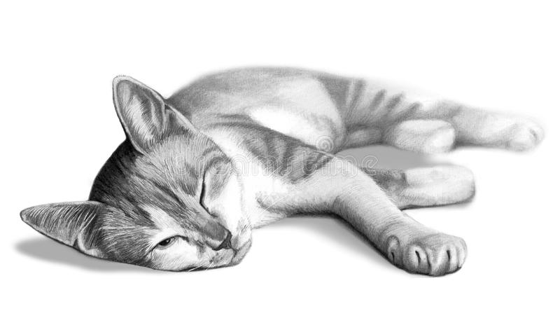 Cat drawing sketch. A pencil drawing of a sleeping cat waking up