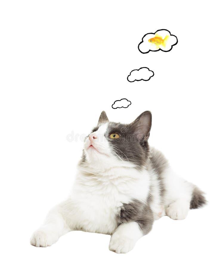 Cat dreams of goldfish royalty free stock image