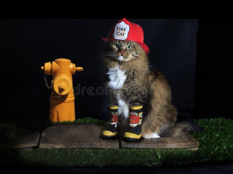 Cat Dressed als Feuerwehrmann lizenzfreie stockfotos