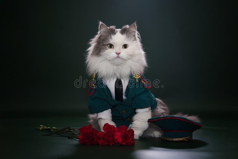 Download Cat dressed as General stock image. Image of defender - 29194813