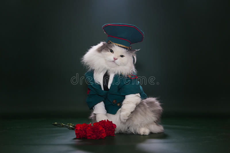 Download Cat dressed as General stock image. Image of important - 29197413