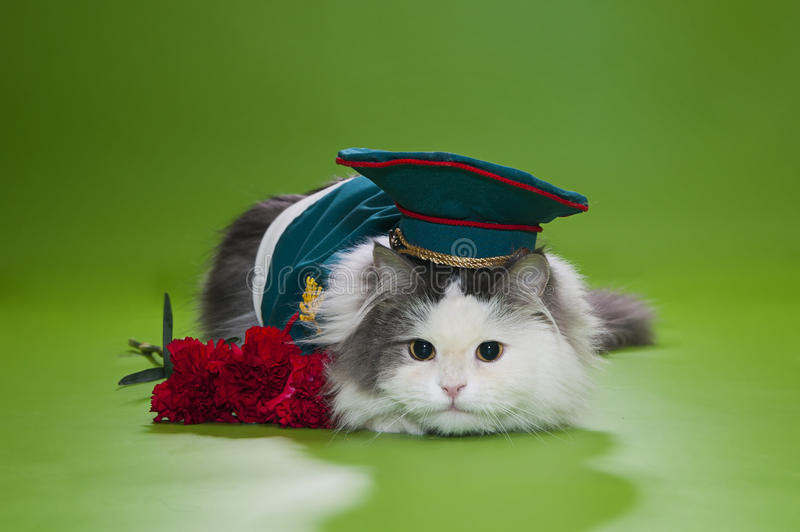 Cat Dressed As General Stock Images
