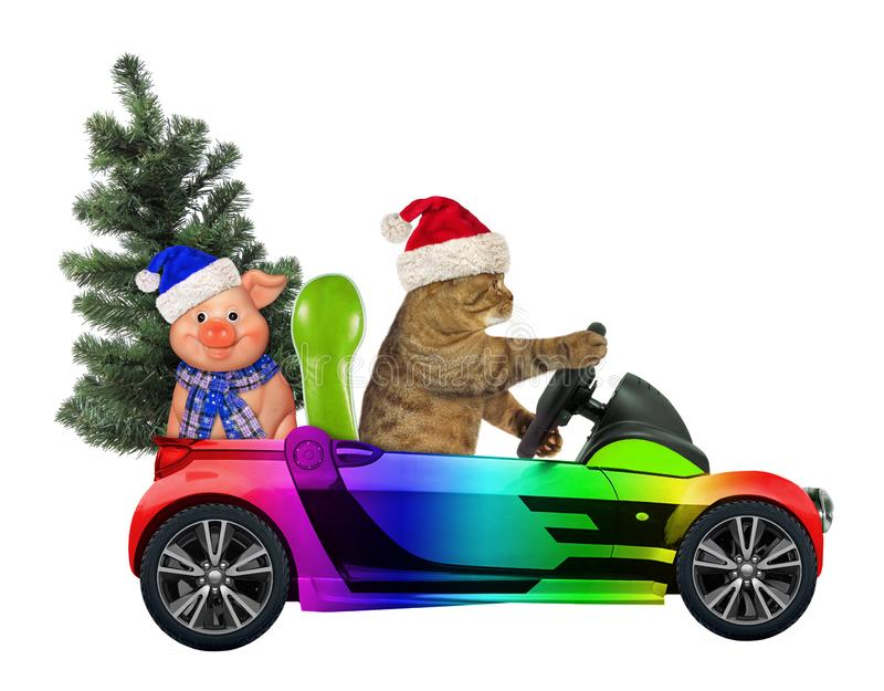 Cat drives a car with a tree and a pig 2. The cat in the Santa Claus hat drives a car with Christmas tree and a merry pig. White background royalty free stock photo