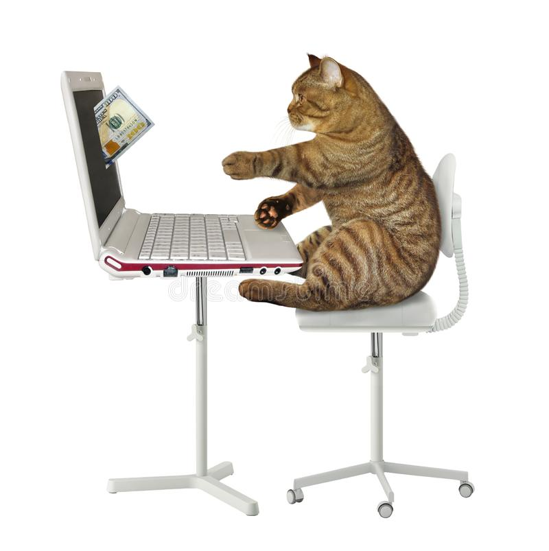 Cat earns money on the computer. The cat is making money on its computer. A hundred dollar bill drops from laptop screen. White background. Isolated stock photo