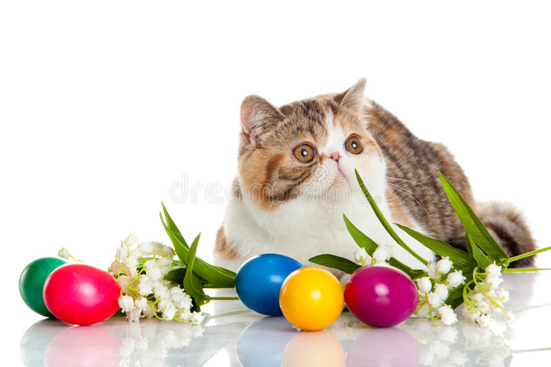 Cat with easter coloured eggs isolated on background colourful postcard. Cat with easter coloured eggs isolated on background creative work stock photography