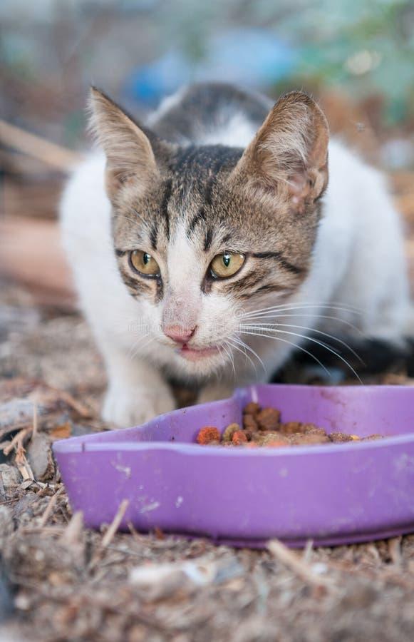 Cat Eating fotografía de archivo libre de regalías