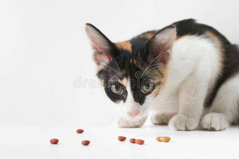 Cat Eating arkivfoton