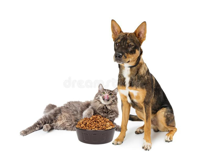 Cat Eating Angry Dogs Food. Funny conceptual photo of cat stealing food from dog`s bowl. Isolated on white stock photography