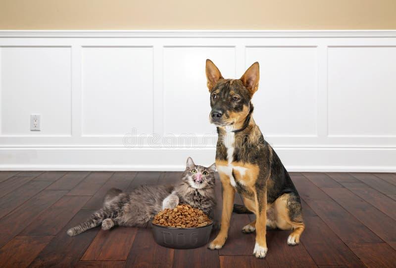Cat Eating Dogs Food i hus royaltyfria bilder