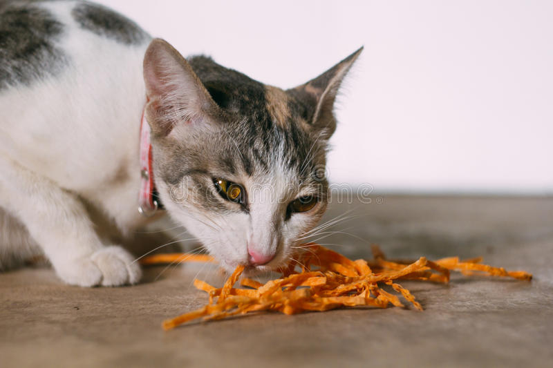 Cat eating fish snack royalty free stock photography
