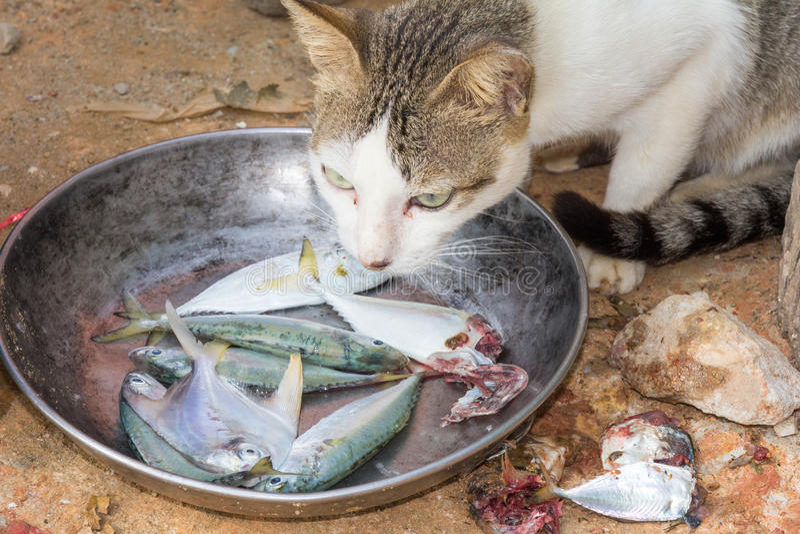 Cat eating fish stock photos